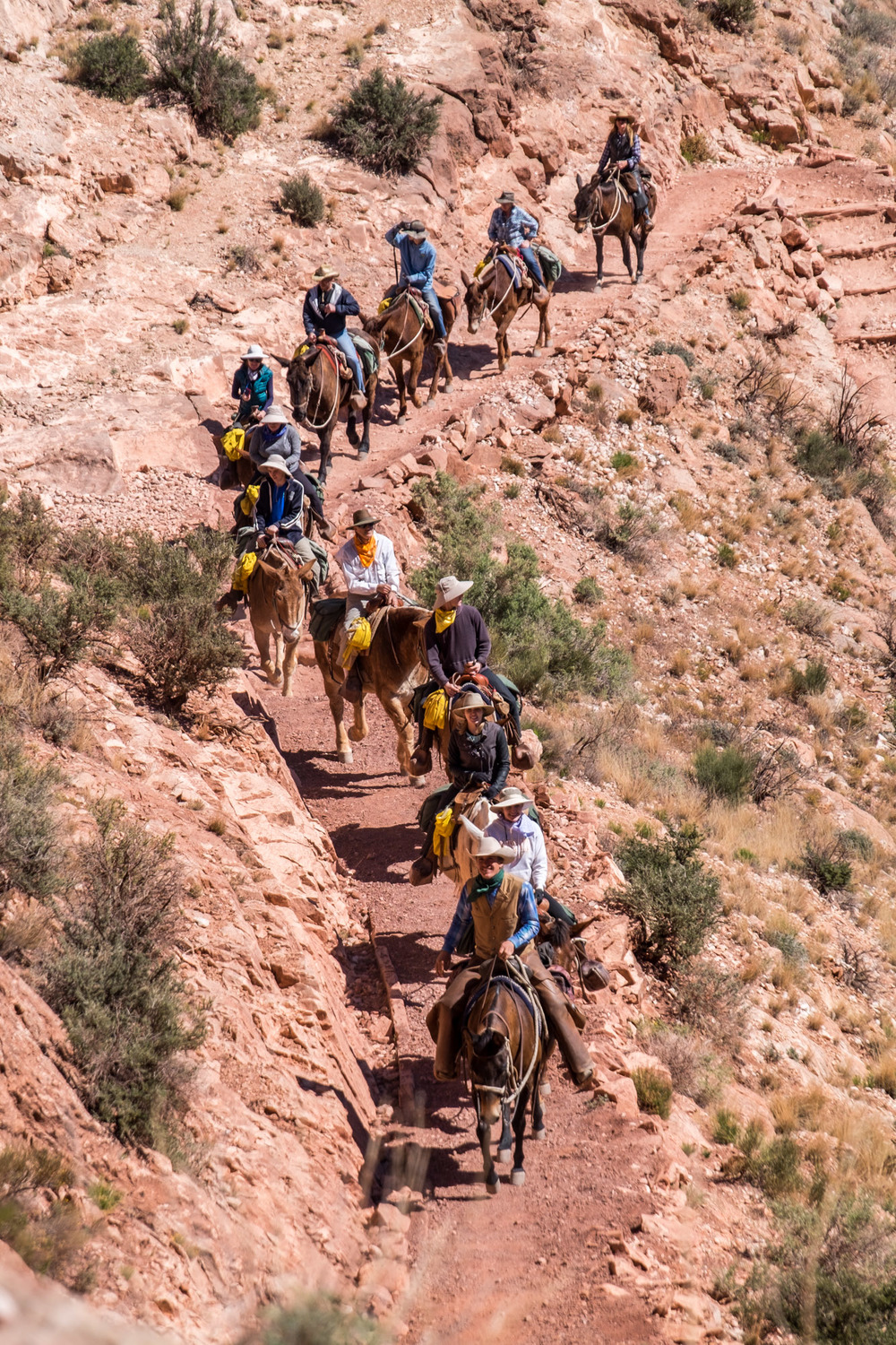 Travelers descend the Bright Angel Trail as we make our way up...