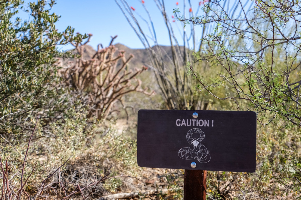 Beware of rattlesnakes in Saguaro National Park!