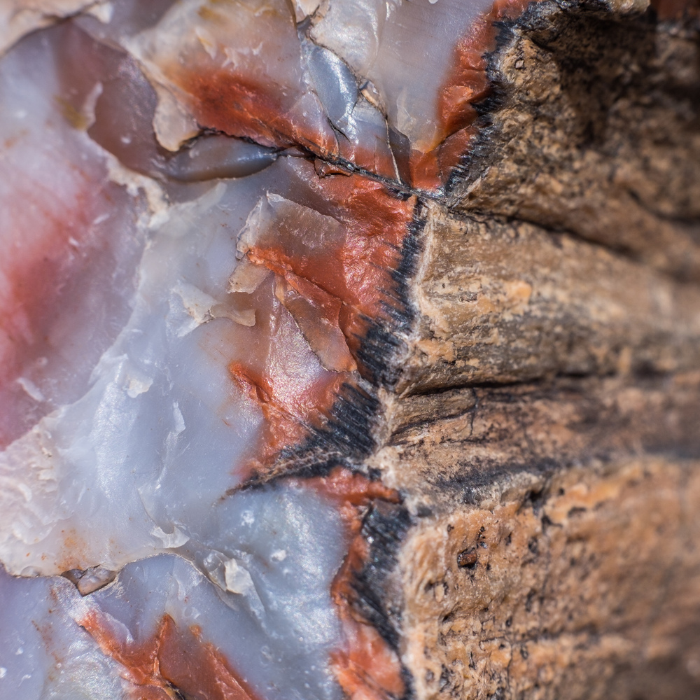 The interior and exterior of a 225-million year old tree now immortalized as petrified wood, at Petrified Forest National Park in Arizona.
