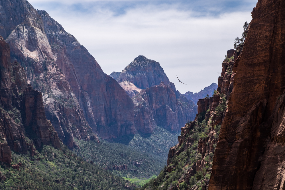 View along the West Rim Trail en route to Angel's Landing.