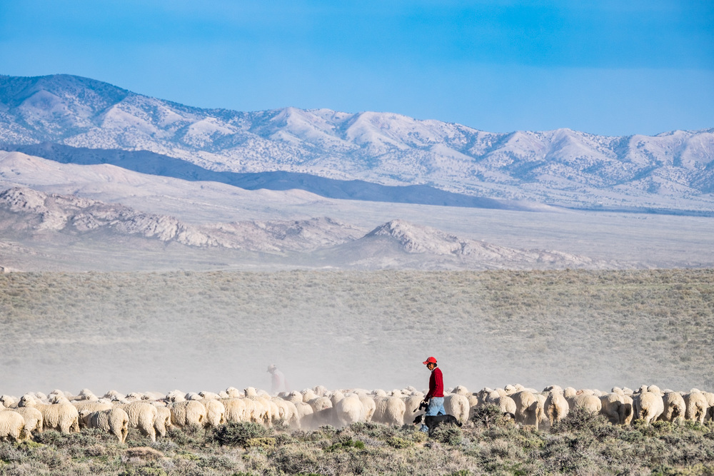 The Spring Creek Sheep Rearing Station, near the Snake Creek entrance to the park, is operated by the Nevada Department of Wildlife. If you go in the late afternoon, you can see the herders returning with the sheep. It's quite a striking sight!