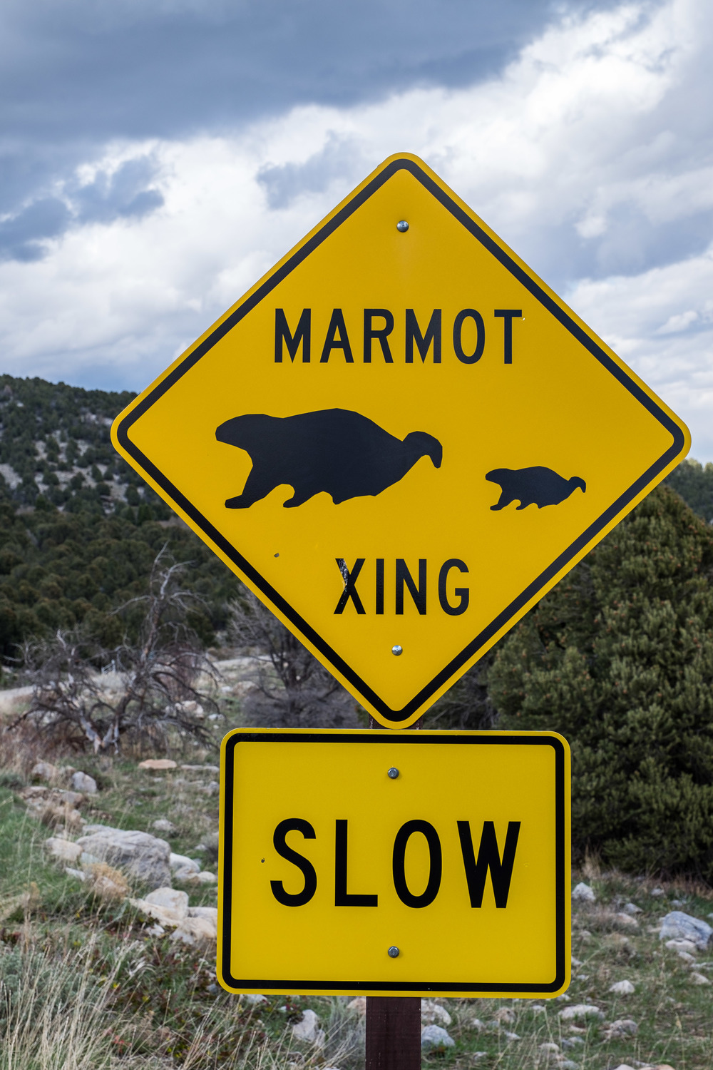 Marmot X-ing in Great Basin National Park in Nevada.