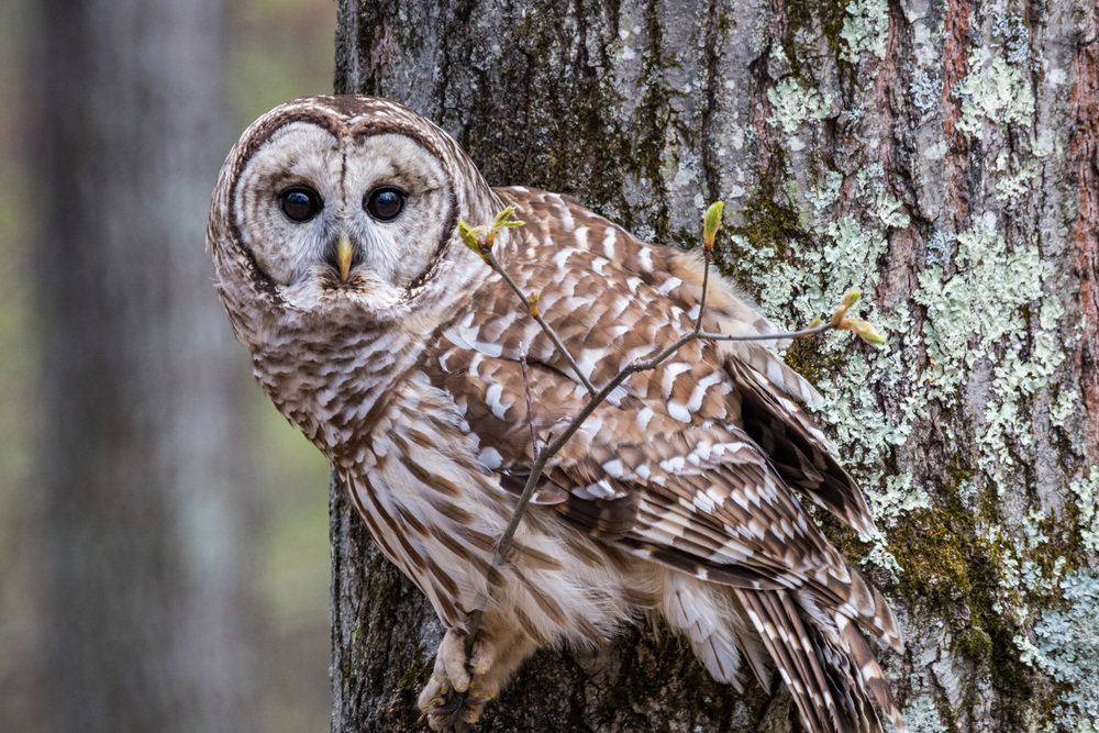 We actually shot this in New Hampshire on the way to visit my aunt, uncle, and cousins for a quick hello. This beautiful owl was only three blocks from their house. it was so nice to sit still for us that I had to include its portrait here. On to the next park!