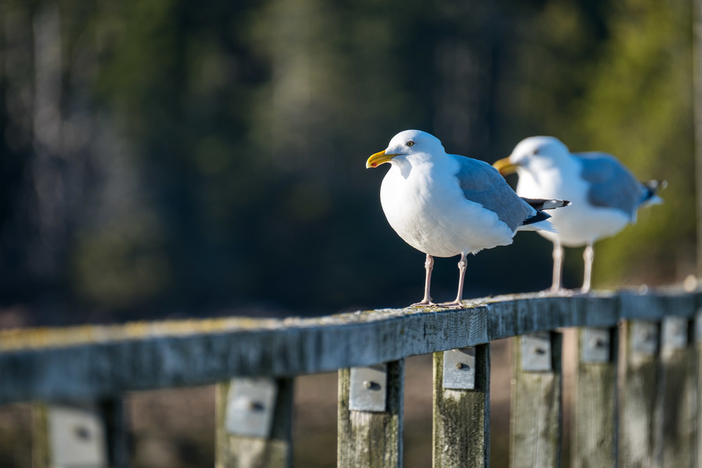 20160427-JI- Acadia National Park-_DSF9249.jpg