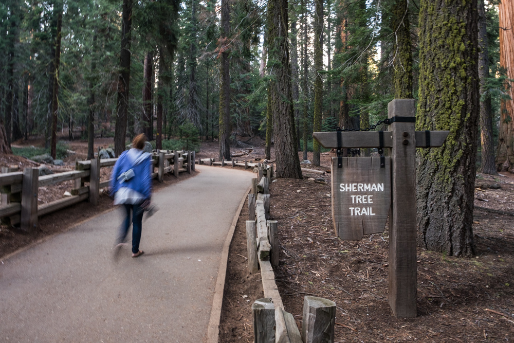 We headed to see the biggest tree (by volume) in the world....the General Sherman Tree.