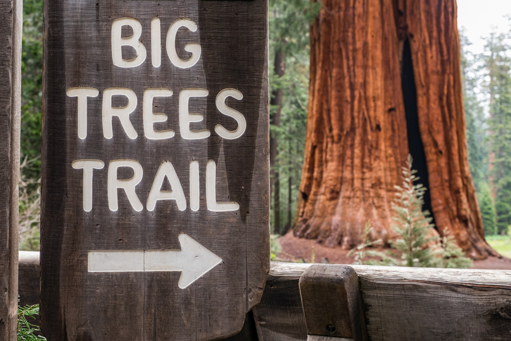Probably one of our favorite hikes in the park...the Big Trees Trail.