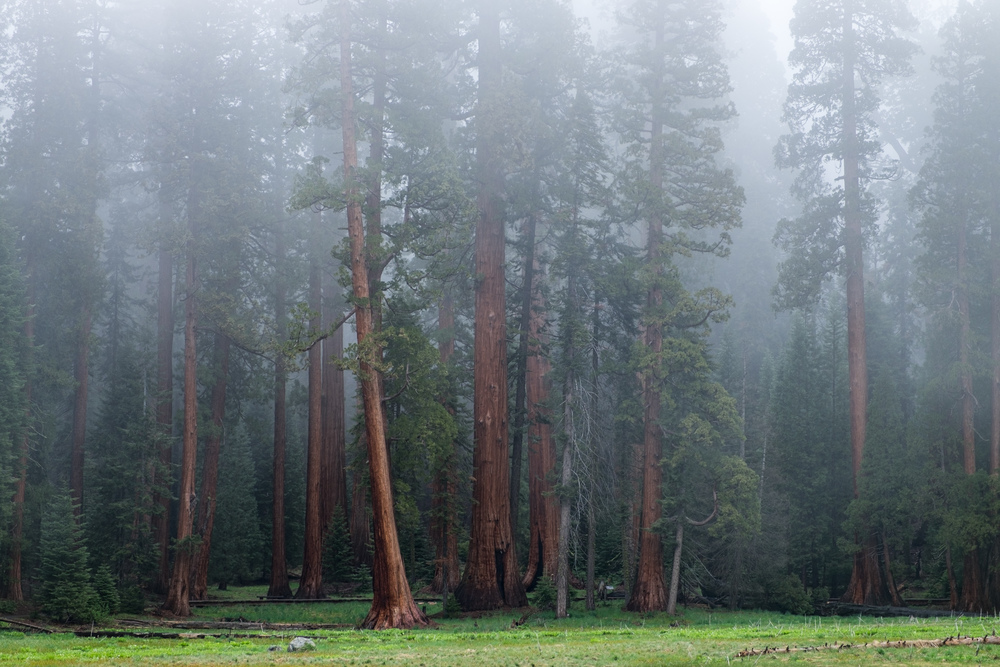 Sequoia National Park - 026.jpg