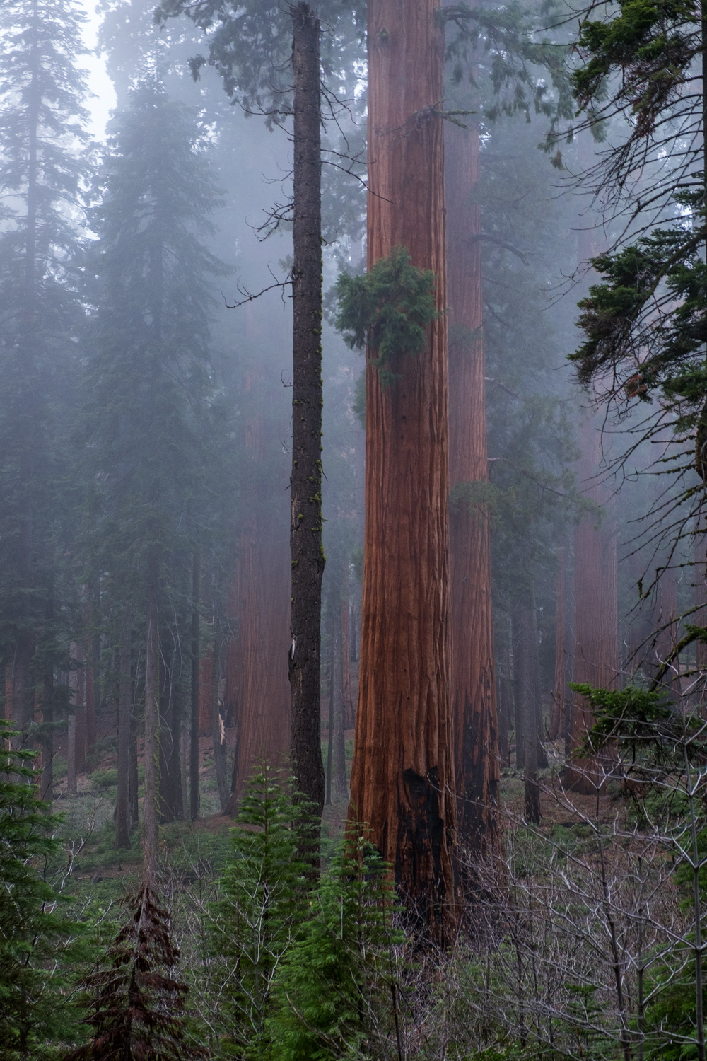 Sequoia National Park - 034.jpg