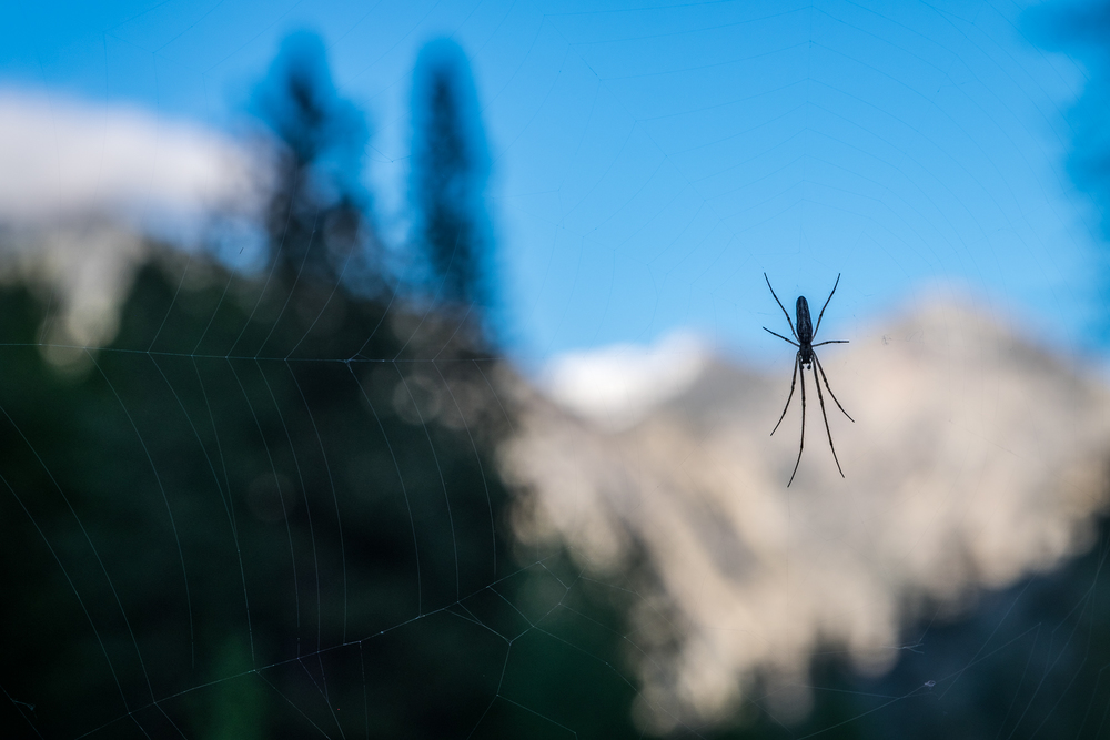 If you keep your eyes peeled, you may even spot a spider on the trail.