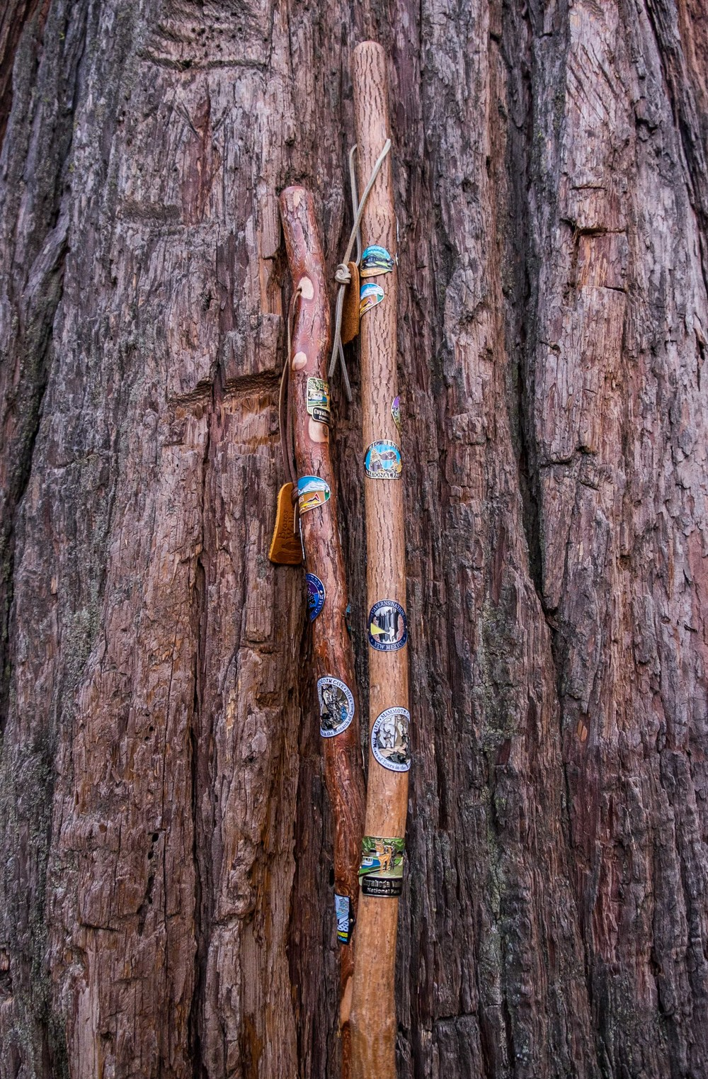 We're collecting hiking stick medallions from all of the parks.