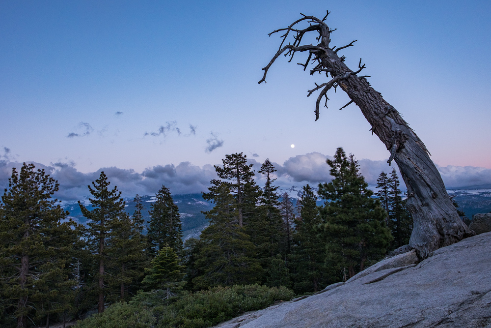 I found an old, twisted tree on my hike up Sentinel Dome.