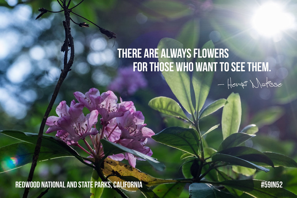 """There are always flowers for those who want to see them.""  – Henri Matisse"