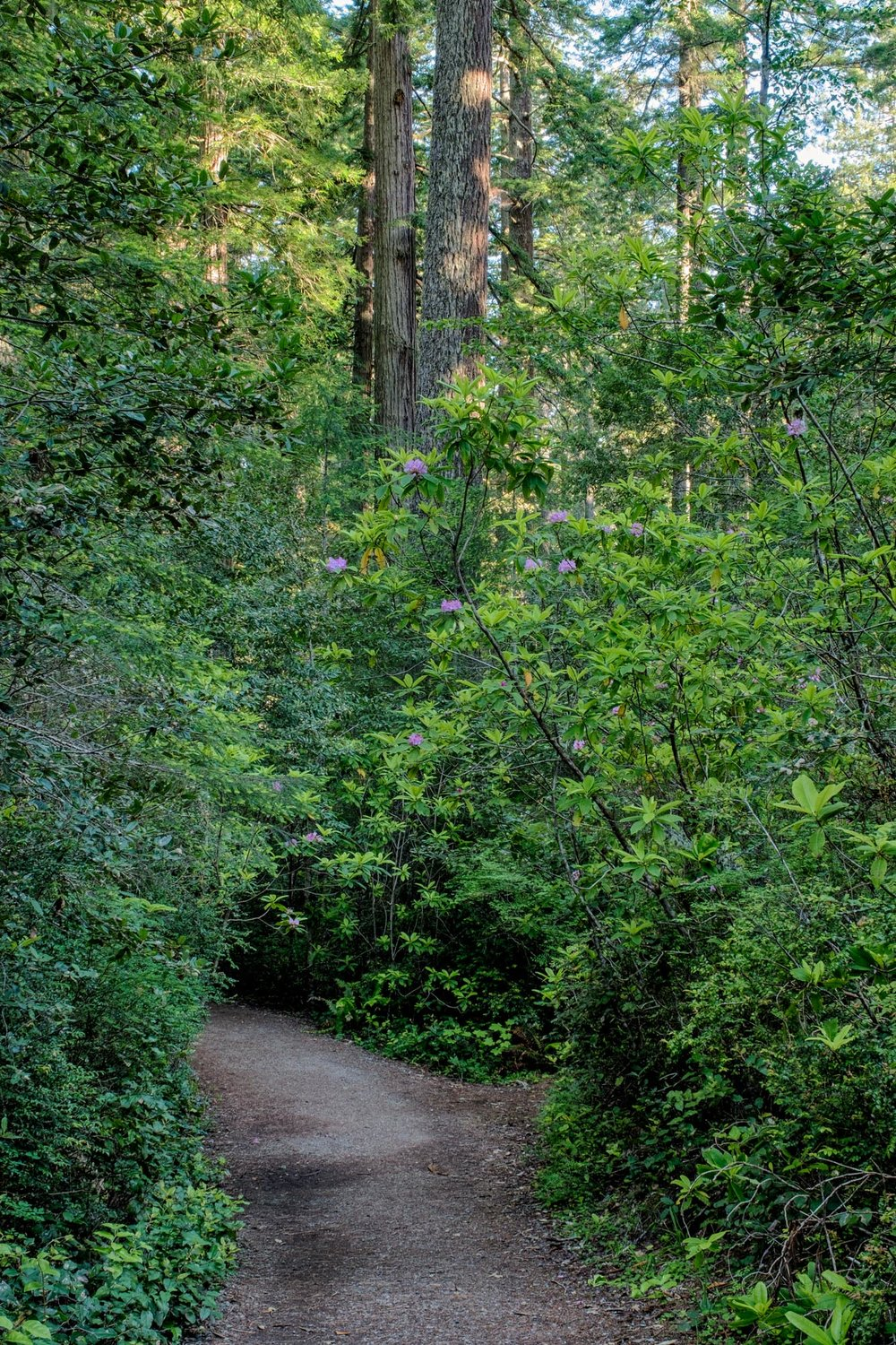 The Ladybird Johnson Grove is where the park was designated as a national park by Lyndon B. Johnson.