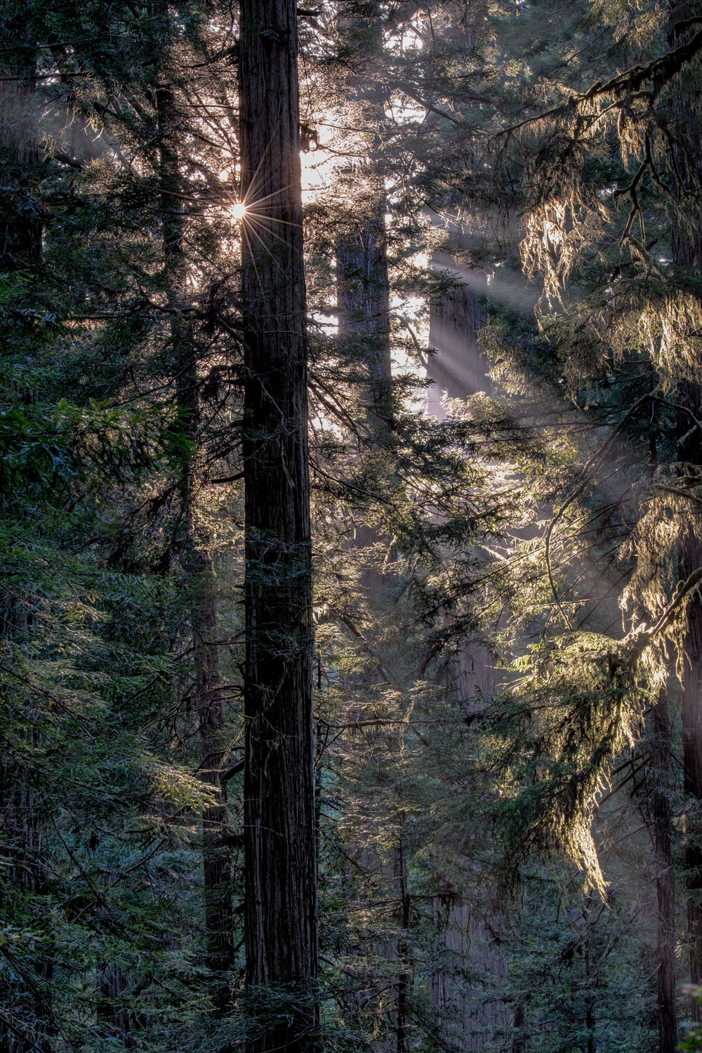 Light beams shine through the thick forest.