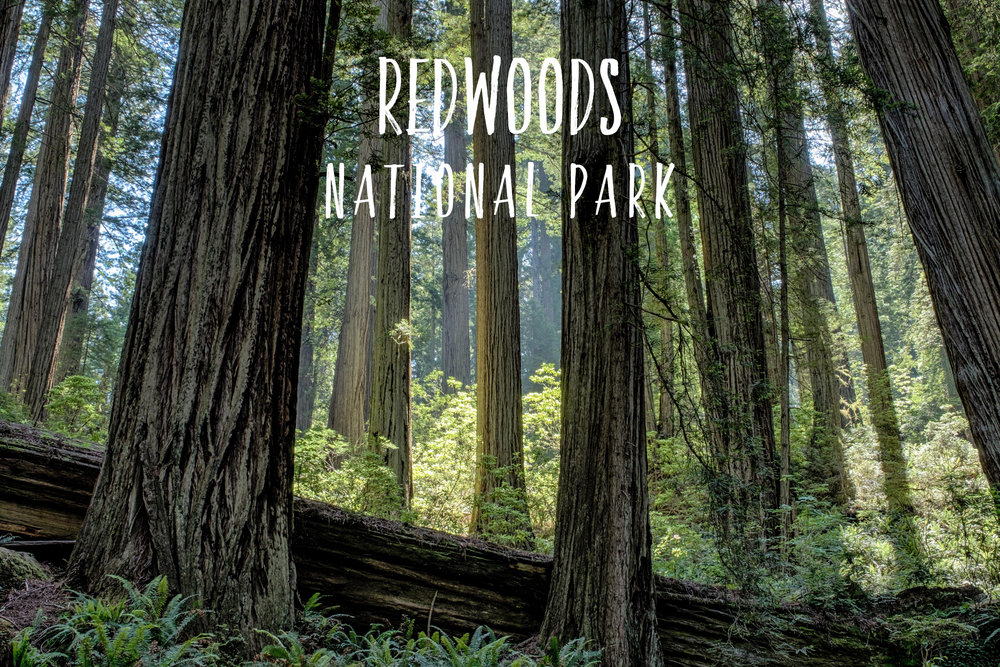 Park 25/59: Redwood National and State Parks in California