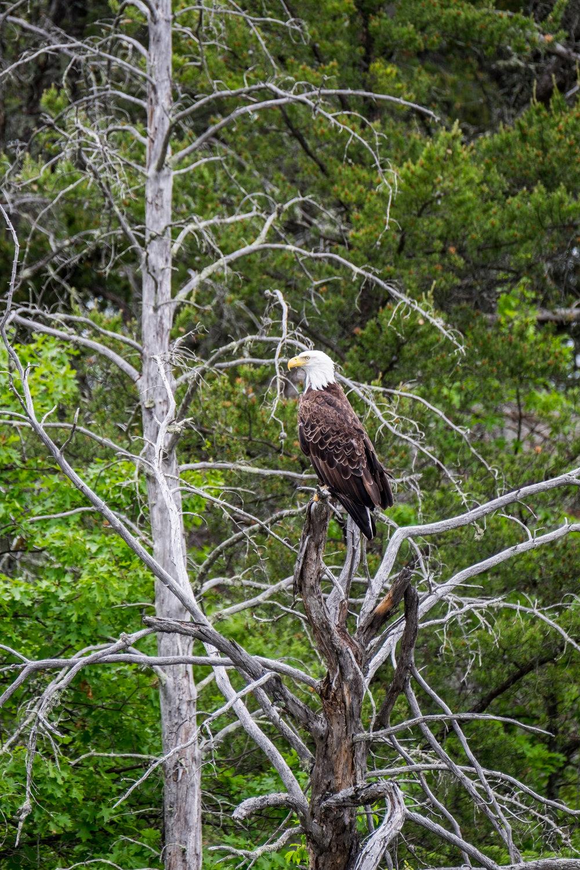 20160606-JI-Voyageurs National Park-_DSF7078.jpg