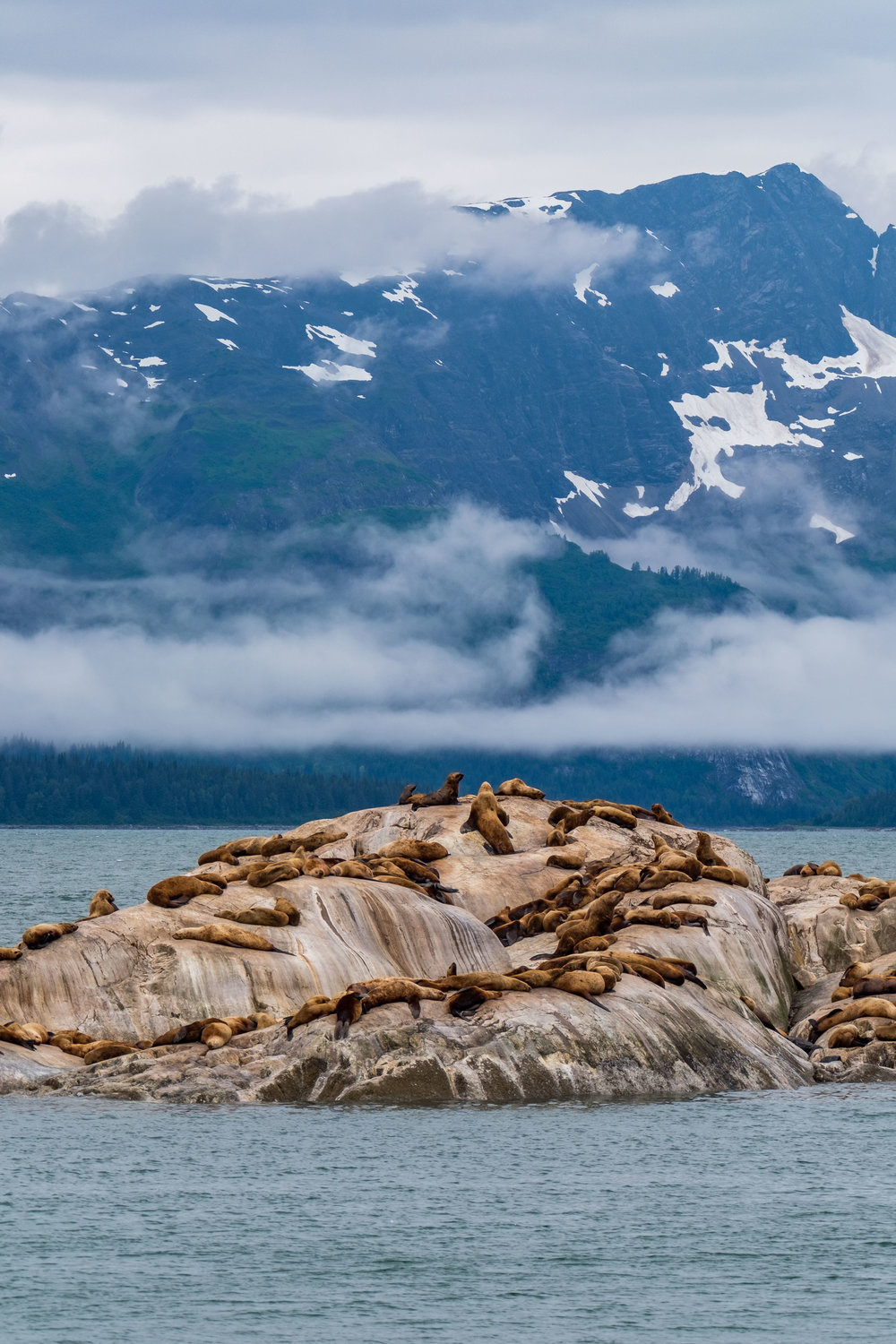 Harbor seals hang out at their home in Glacier Bay, Alaska.