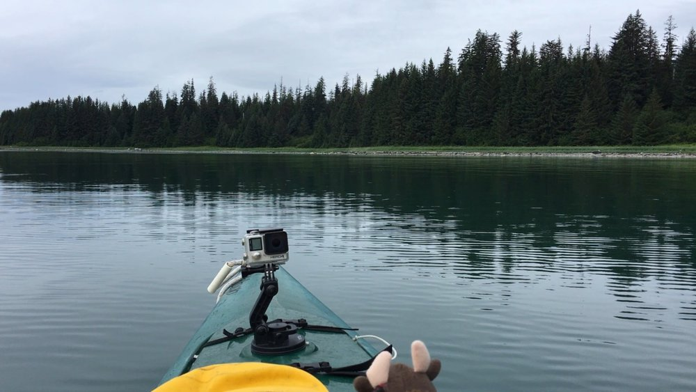 Paddling with Buddy Bison and the GoPro in Bartlett Cove in Glacier Bay, Alaska.