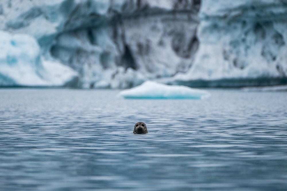 Stalker seal.