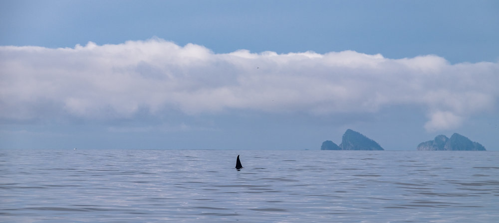 We did see some orca whales as well.