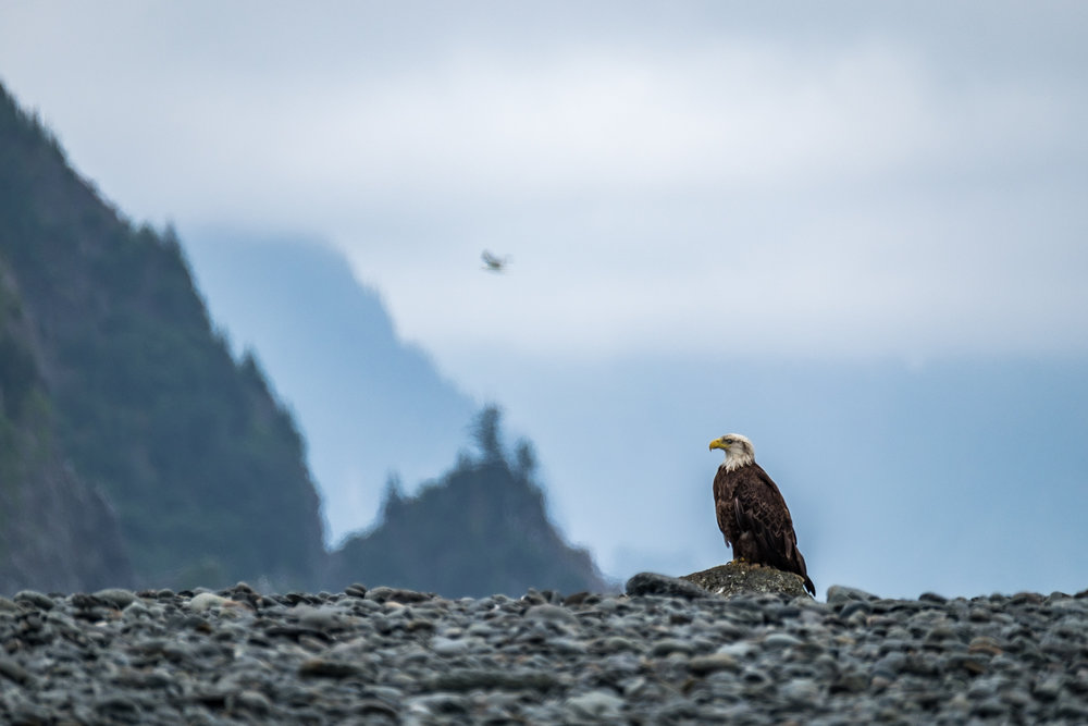America's national bird and national animal, the Bald Eagle, is just one species of 191 that birders will mark off their list while visiting this national park.