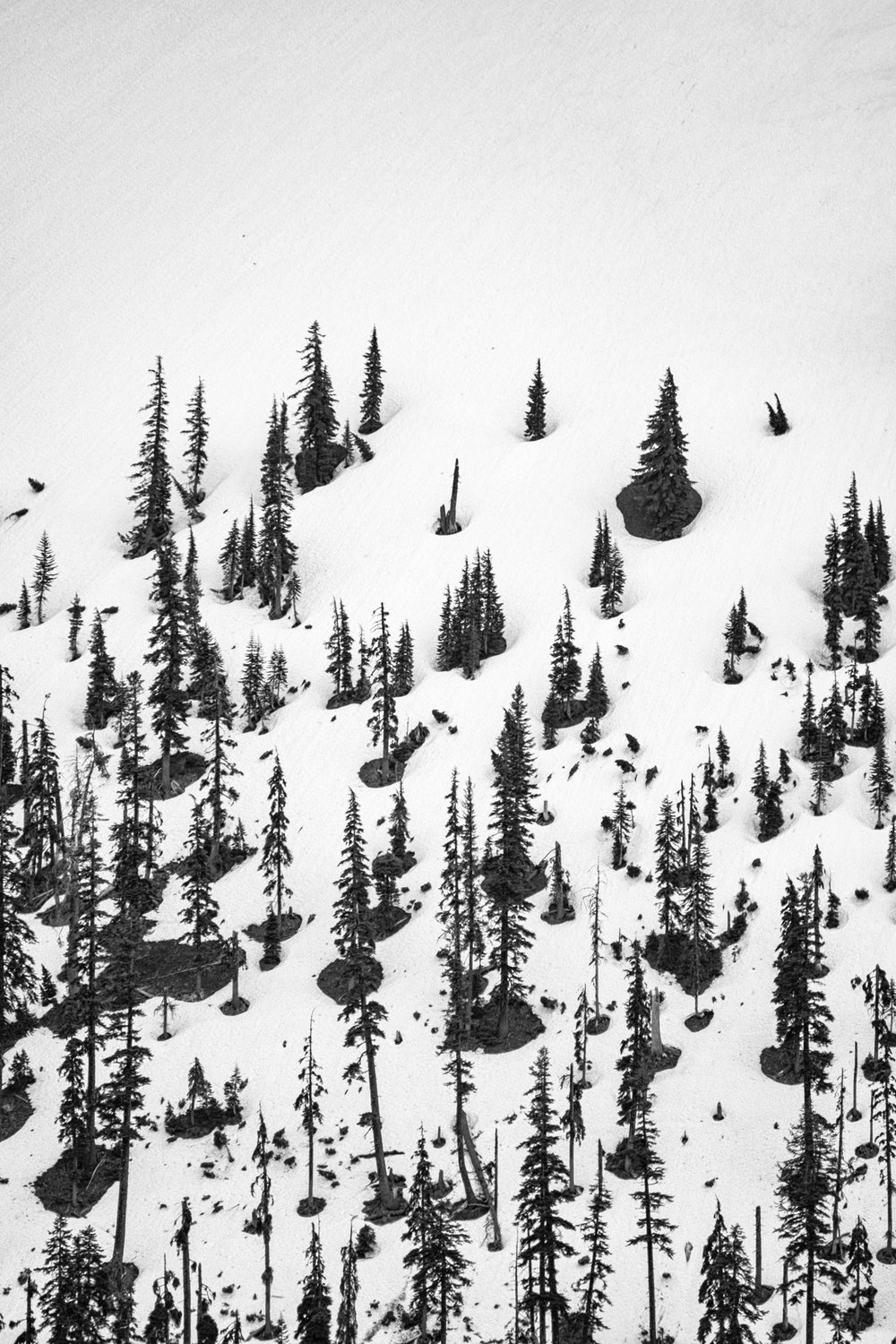 A black and white of trees and snow on Wizard Island.