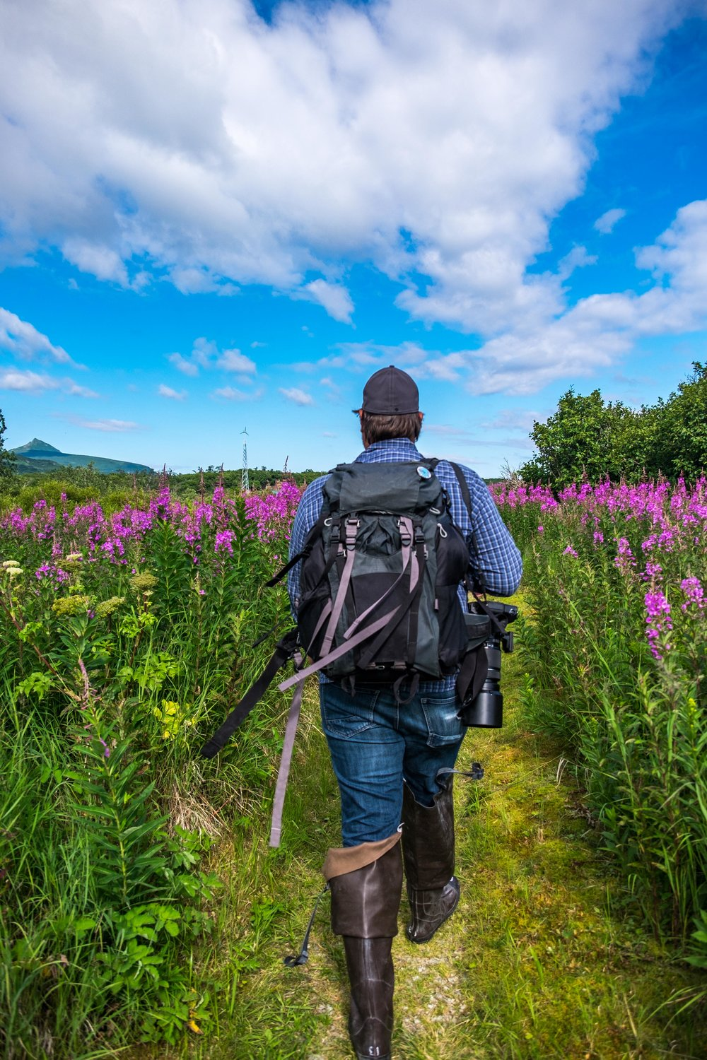 Jonathan Irish hikes through vibrant fireweed on his way to the boat at the Katmai Wilderness Lodge on the Shelikof Straight.