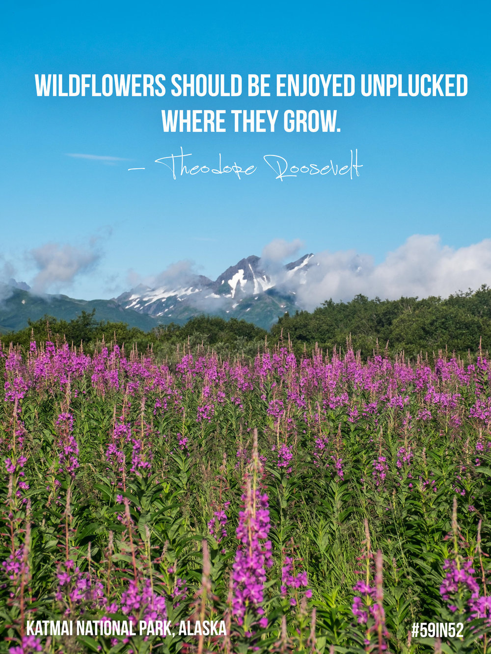 """Wildflowers should be enjoyed unplucked where they grow."" Theodore Roosevelt"