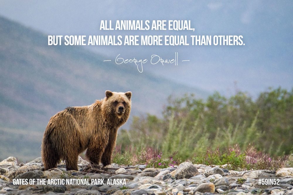 'All animals are equal, but some animals are more equal than others.' - George Orwell