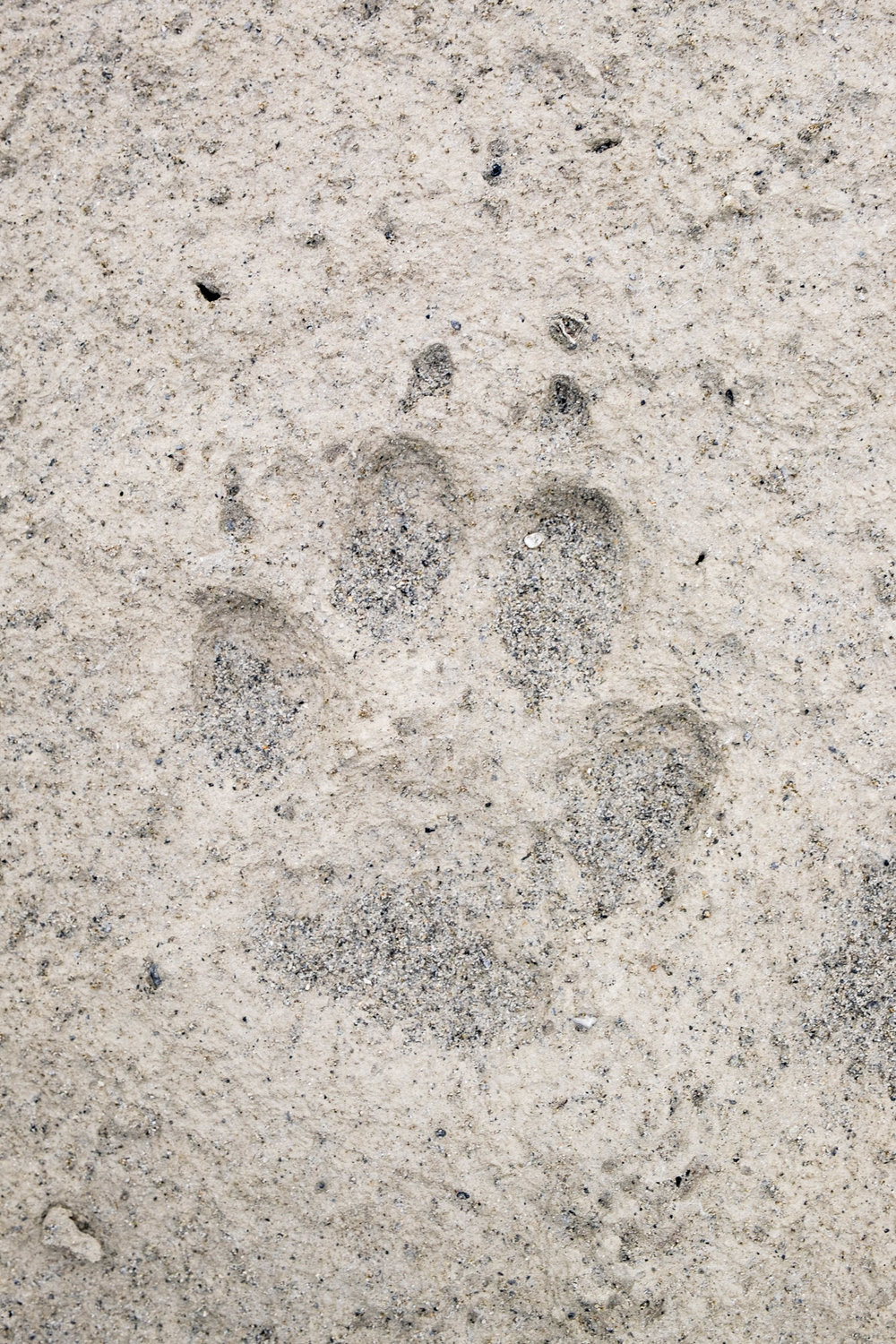 Everywhere we go we see bears (and bearprints). We thought we would see more caribou than bears, but that ended up being not ture. We saw a LOT of bears.