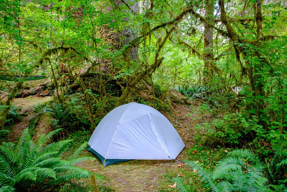 All set up to camp in the Hoh Rainforest  —  an enchanting place to hang your rain hat.