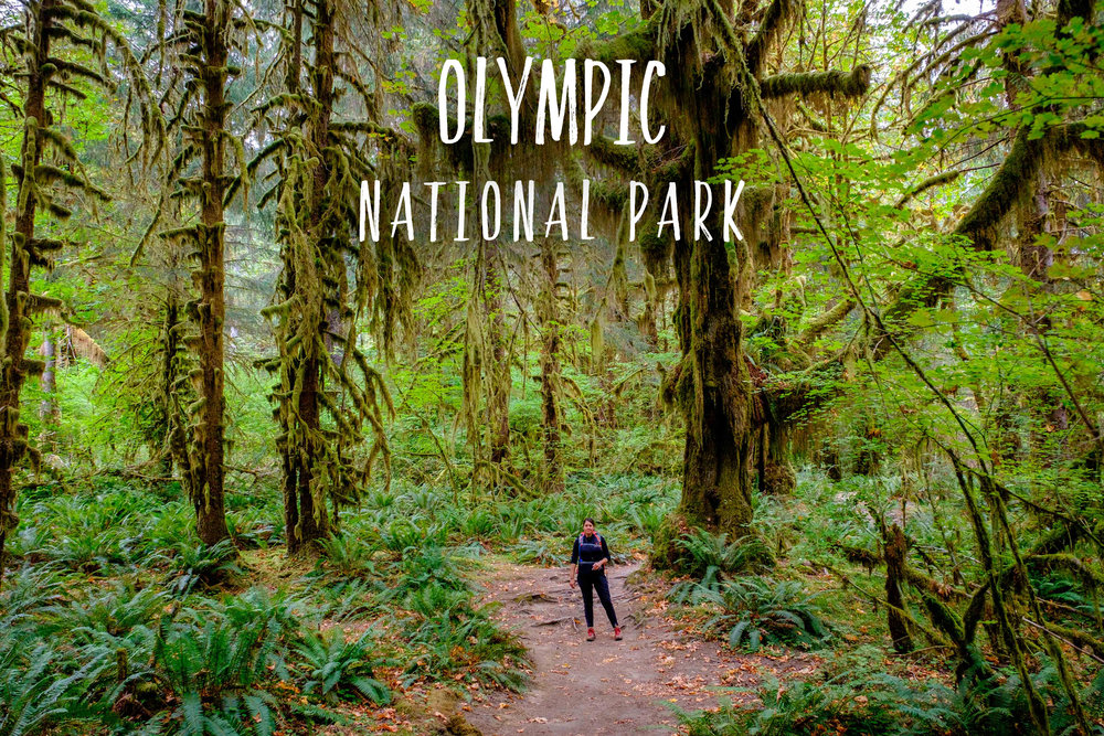 Park 38/59: Olympic National Park in Washington state