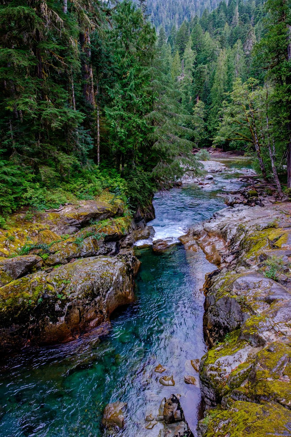 There are 6 major rivers that are offshoots of Mount Rainier. This is the Nisqually, in the Paradise area of the park.