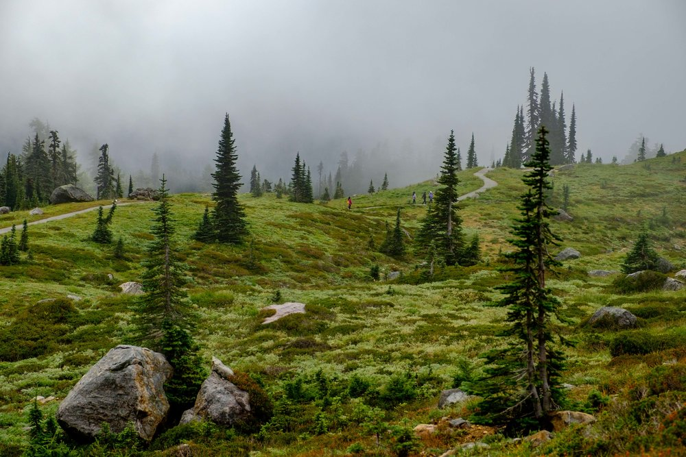 Skyline Trail on a typical marine-layered day in Mount Rainier National Park in early September.