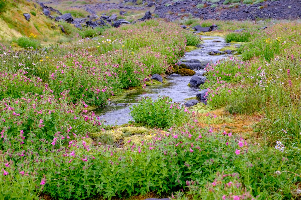 Wildflowers still dusting the landscape late in the 2016 summer season.
