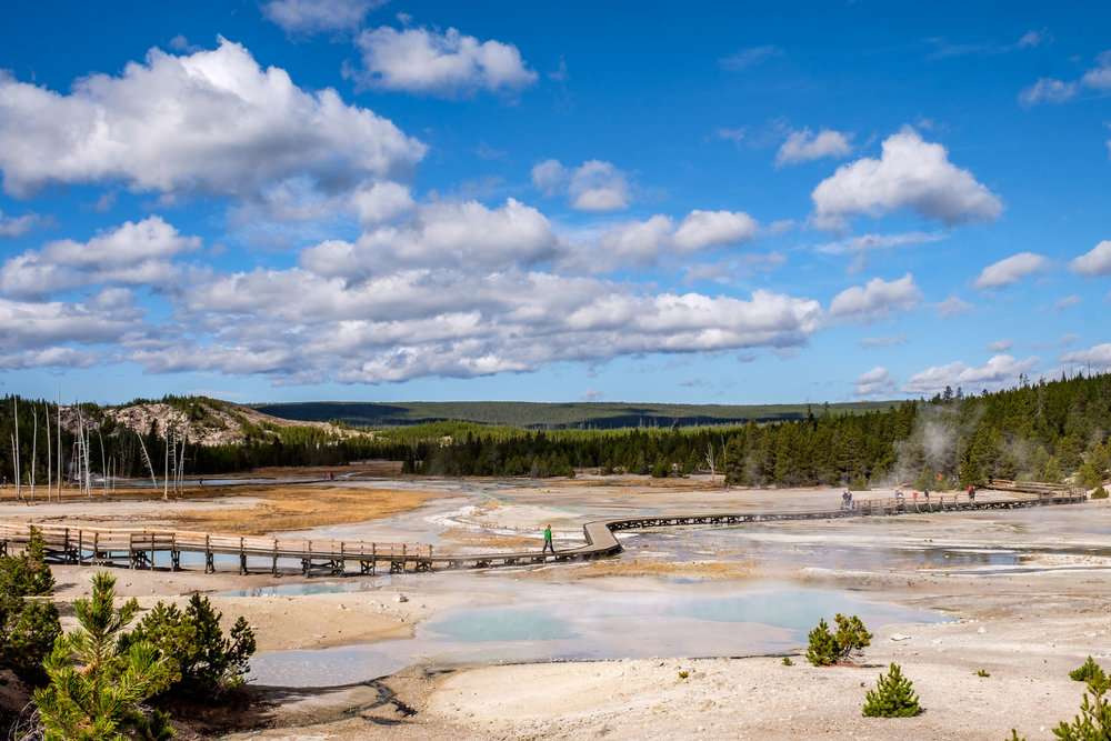 The Norris Geyser Basin is one of the most colorful areas in the park.