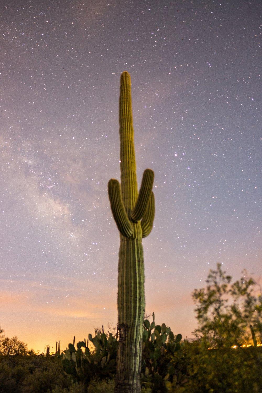 20160321-JI-Saguaro National Park-_DSF7049 (3).jpg