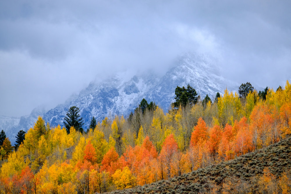 Fall foliage! Brilliant in the Tetons.