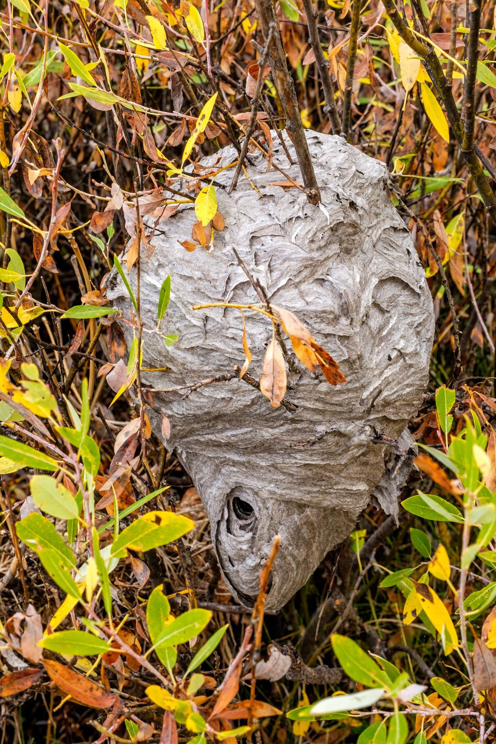 Wandering off trail, we found a hornets nest in the trees. Needless to say, we kept our distance.