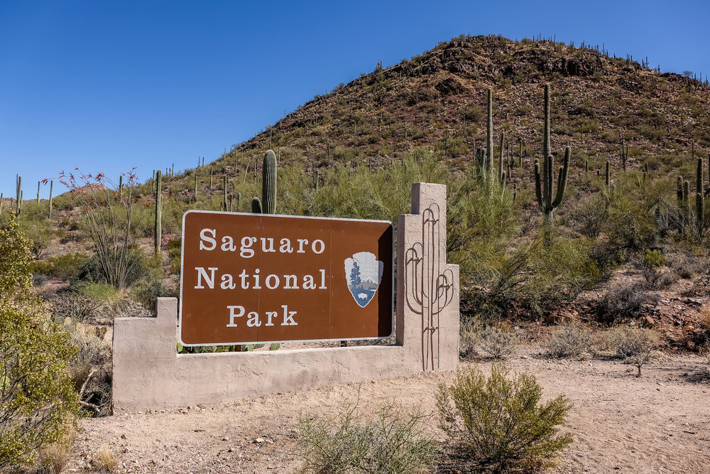 20160325-SP-Saguaro National Park-_DSF8479.jpg