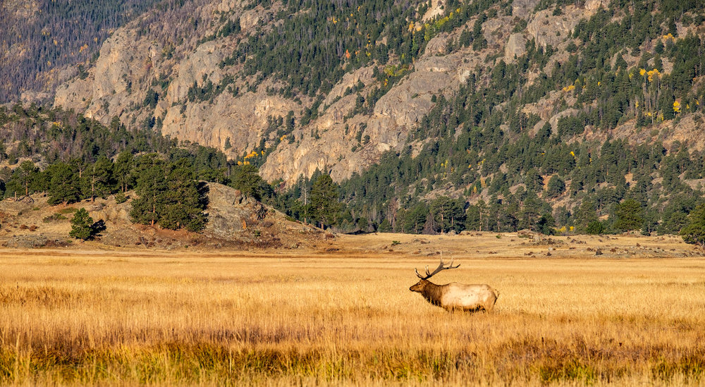 October is prime time for the Elk rut (mating season).
