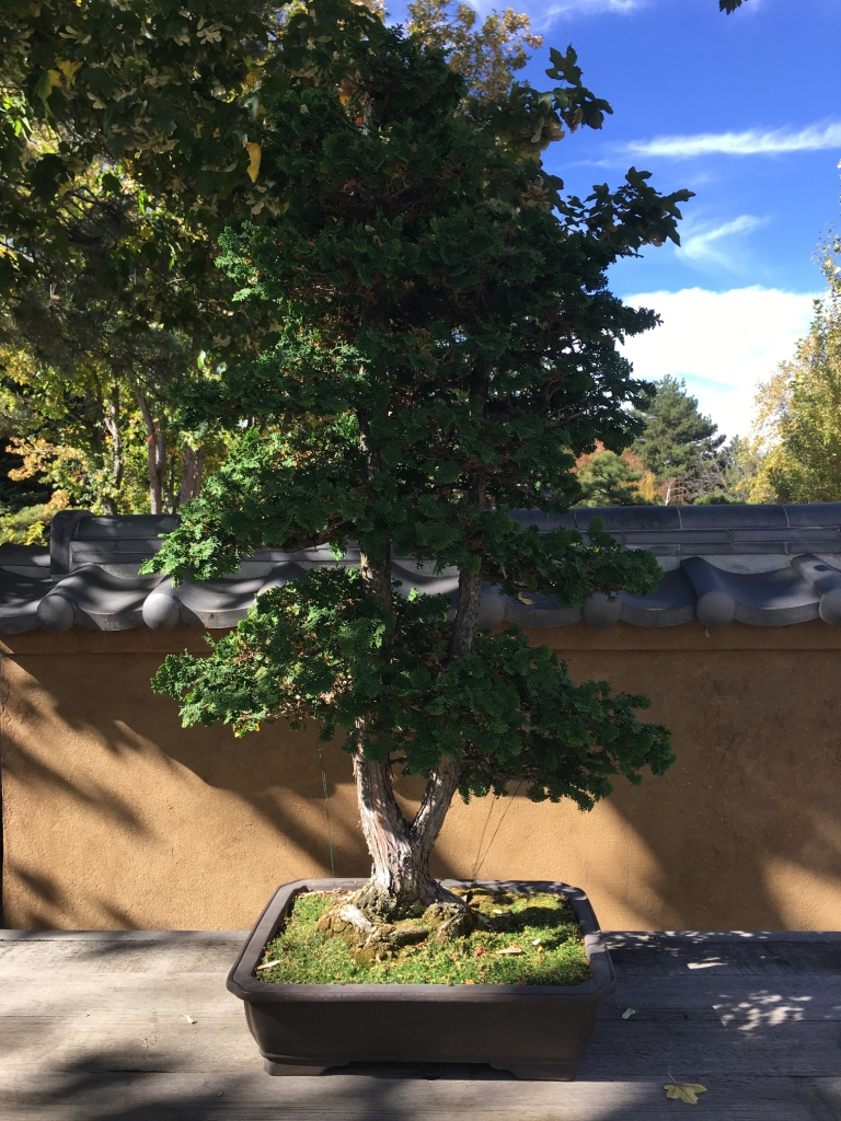 The Shofu-en Japanese garden exhibits bonsai trees gifted to the Gardens by local bonsai masters. Each of them shows the extreme care that goes into cultivating every single tree.