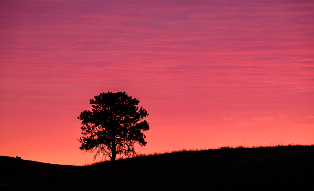 Loved this lone tree.