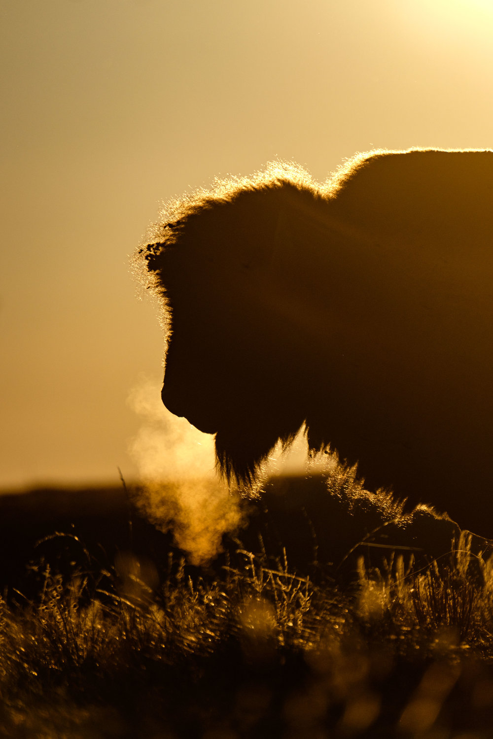 Bison at Wind Cave National Park in South Dakota.