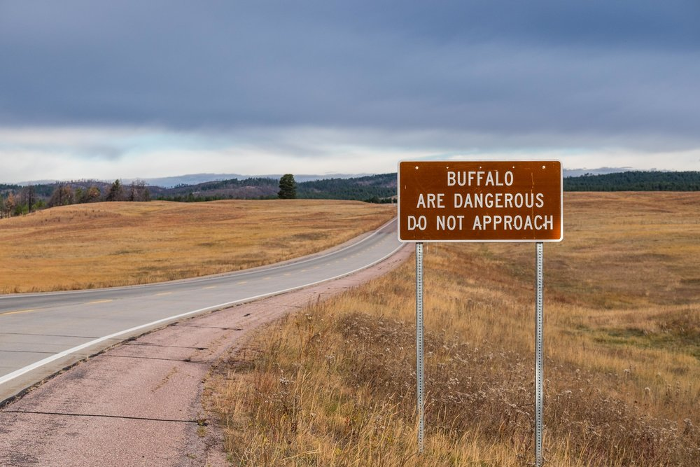 Beware of the bison in Wind Cave in South Dakota.