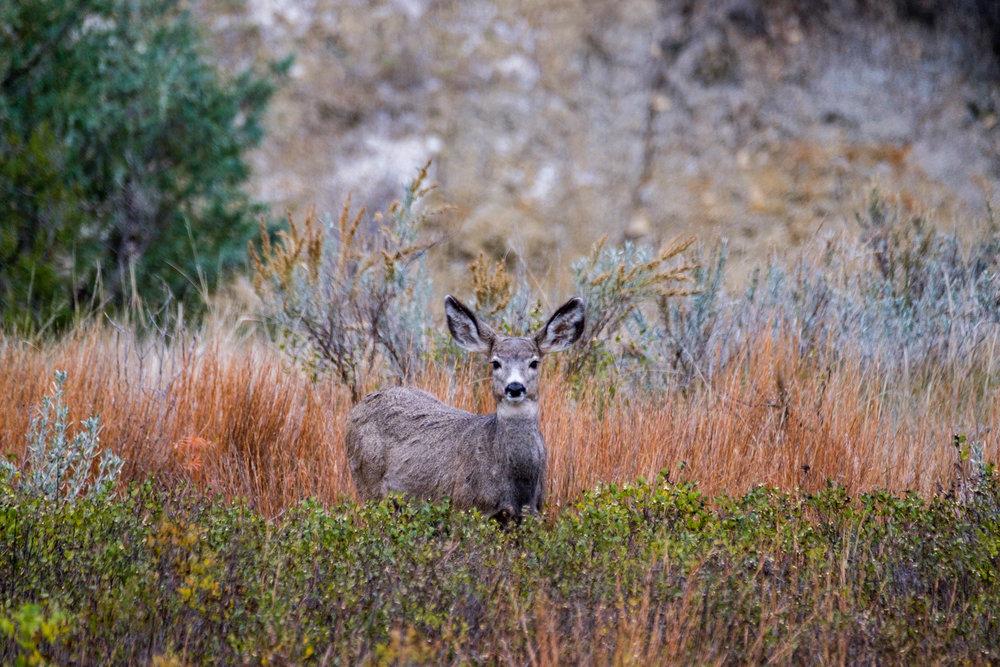 Theodore Roosevelt National Park - 017.jpg