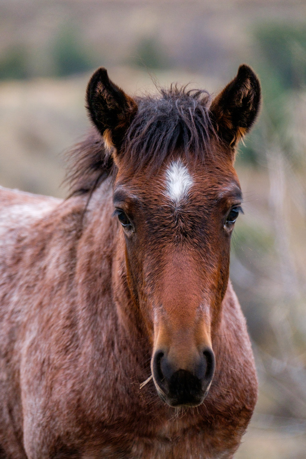 The park is famous for its beautiful wild horses, all of which have names given by the park service.