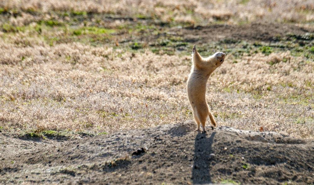 Theodore Roosevelt National Park - 049.jpg