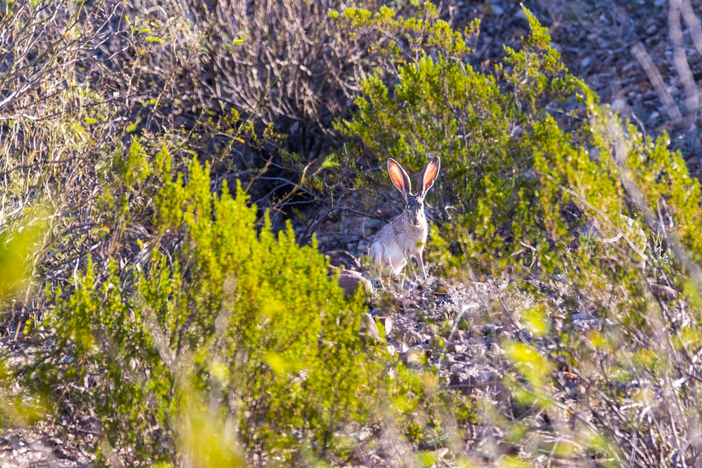 20160225-JI-Big Bend National Park-822-_DSF5261.jpg