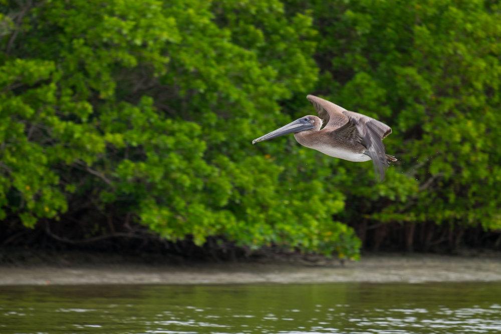 20160102-JI-Everglades-595-_DSF0134.jpg